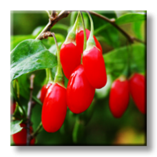 Годжи Бери, Лициум / Goji berry, Lycium barbarum